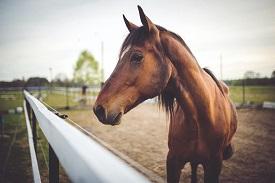 Horse Genetics 1